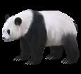 Panda ##STADE## - coat 65