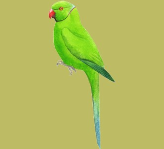 Take in a green parakeet species jungle animal