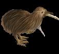 Kiwi ##STADE## - coat 52