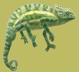 Take in a chameleon species jungle animal