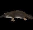 Platypus ##STADE## - coat 37
