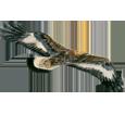 Golden Eagle ##STADE## - coat 69